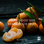 A Tree and Its Fruit: A Sermon on  Matthew 7: 15-20